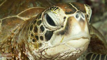 Hausriff Indonesien Schildkröten